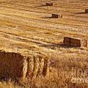Straw Field Poster