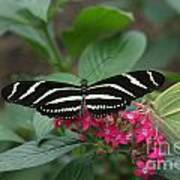 Striped Butterfly Poster