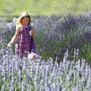 Stroll Through The Lavender Poster