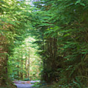 Stroll Through The Quinault Rain Forest Poster