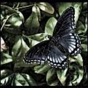 Subdued Butterfly Poster