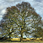 Suffolk Winter Landscape Poster