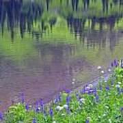 Summer Abstract At Tipsoo Lake Poster