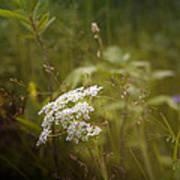 Summer Grasses Poster
