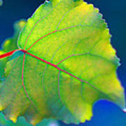 Summer Leaf Poster