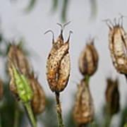 Summer Seeds Poster