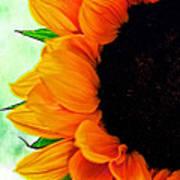 Sun Flower Poster