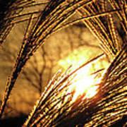 Sun In Grass Panoramic Poster
