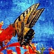 Sun Lit Eastern Tiger Swallowtail Poster