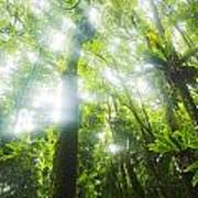 Sun Rays Through Rainforest Trees Poster