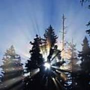 Sunburst Through Silhouetted Pine Trees Poster