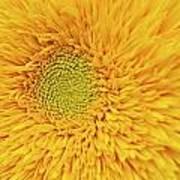 Sunflower 2881 Poster