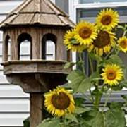 Sunflower Bird Feeder Poster