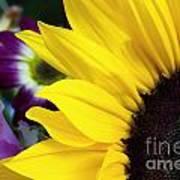 Sunflower Closeup Poster