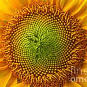 Sunflower Fantasy Poster