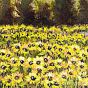 Sunflower Field Series W Silver Leaf By Vic Mastis Poster