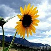 Sunflower In The Rockies With Friends Poster by Donna Parlow