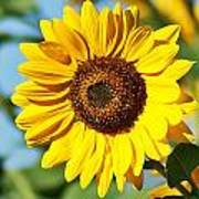 Sunflower Small File Poster