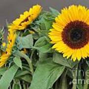 Sunflowers At Pikes Market Poster