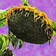 Sunflowers Birmingham Digital Poster