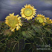 Sunflowers Digital Painting Poster