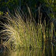 Sunlight On Grass Original Poster