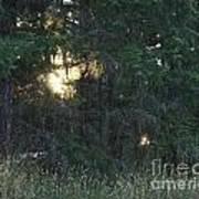 Sunlight Orbs 3 Poster