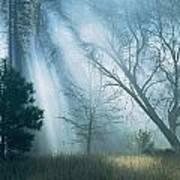 Sunlight Pierces The Morning Mist Poster