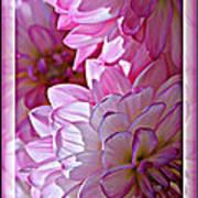 Sunlight Through Pink Dahlias Poster by Carol Groenen