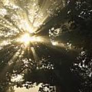 Sunlight Through Tree Cahir, County Poster