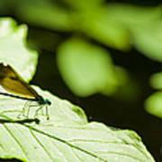 Sunlit Dragonfly Poster