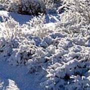 Sunlit Snowy Sanctuary Poster