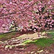 Sunny Patch Under The Cherry Trees Poster