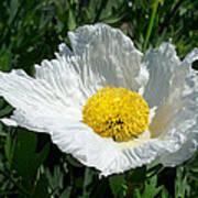 Sunny Side Flower Poster