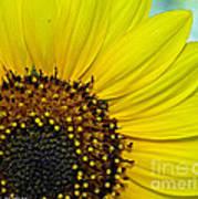 Sunny Summer Sunflower Poster