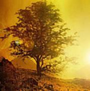 Sunrise Flare Poster