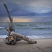 Sunrise On The Beach With Driftwood At Oscoda Poster