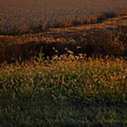Sunrise On Wild Grasses II Poster