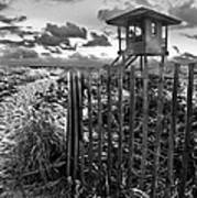 Sunrise Sentinel In Black And White Poster