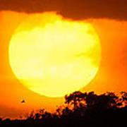Sunset And Bird Poster