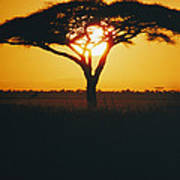 Sunset And Trees, Serengeti Plains Poster