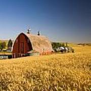 Sunset Barn And Wheat Field Steptoe Poster