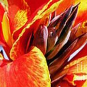 Sunset Floral Poster