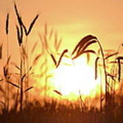 Sunset Rye IIi Poster