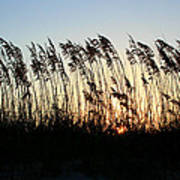 Sunset Sea Oats Poster