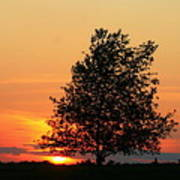 Square Photograph Of A Fiery Orange Sunset And Tree Silhouette Poster