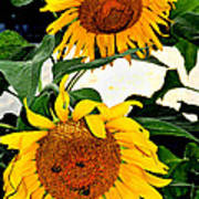 Sunset Sunlowers Poster