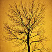Sunset Tree Silhouette Poster