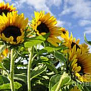 Sunshine Lolipops Poster