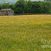 Swaledale Buttercup Meadow Poster